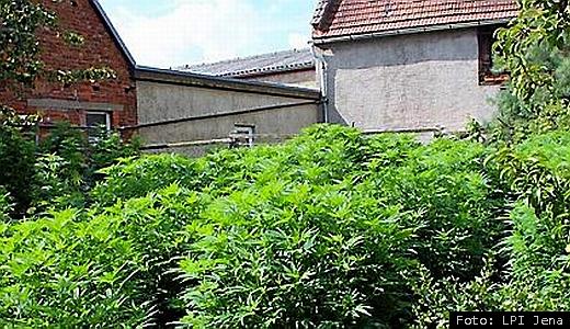 JEZT - Cannabisplantage in Bad Klosterlausnitz - Foto der LPI Jena 2014