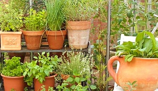 JEZT - Jede Menge Gartenkraeuter