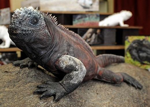 JEZT - Sonderausstellung des Phyletischen Museums Jena zu den Galapagos-Inseln - Image 2