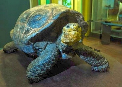 JEZT - Sonderausstellung des Phyletischen Museums Jena zu den Galapagos-Inseln - Image 4