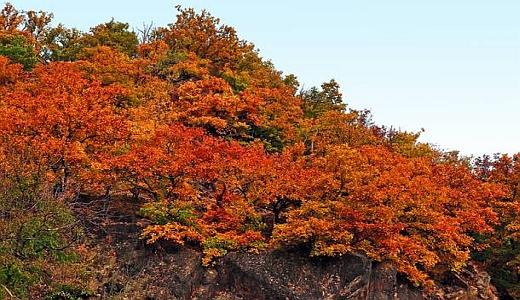 JEZT - Trauben-Eichen im Herbst - Foto © Andreas Rohloff