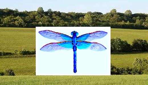 JEZT - Naturschutzstiftung Jena Thueringen - Die blaue Libelle - Abbildung © MediaPool Jena