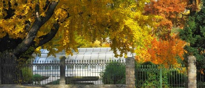 JEZT - Auch im Botanischen Garten der Universitaet Jena - hier mit Blick auf den sog Goethe-Ginkgo-  finden Teile des diesjaehrigen Meisterkurses statt - Foto © FSU Jena Guenther