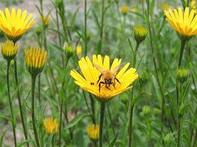 JEZT - Insektenallergie - Nur 20 Prozent der Insektengiftallergiker werden auch tatsaechlich behandelt - Symbolfoto © UKJ