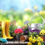 """""""Equinoxe"""": Mit der Tag- und Nachtgleiche startet heute Nachmittag offiziell der Frühling"""