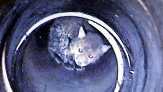 Fuchs schaut in die Kamera Tier konnte lokalisiert werden. Foto © Feuerwehr Jena