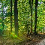 Wald als Naturpark - Symbolfoto © by vulcanus - FotoiaLicense#203104291