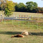 Ziegen und Schafe auf Weide bei Cospeda getötet: Wer kann Hinweise geben?